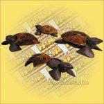 Teknős hamutartó aboriginal kicsi B